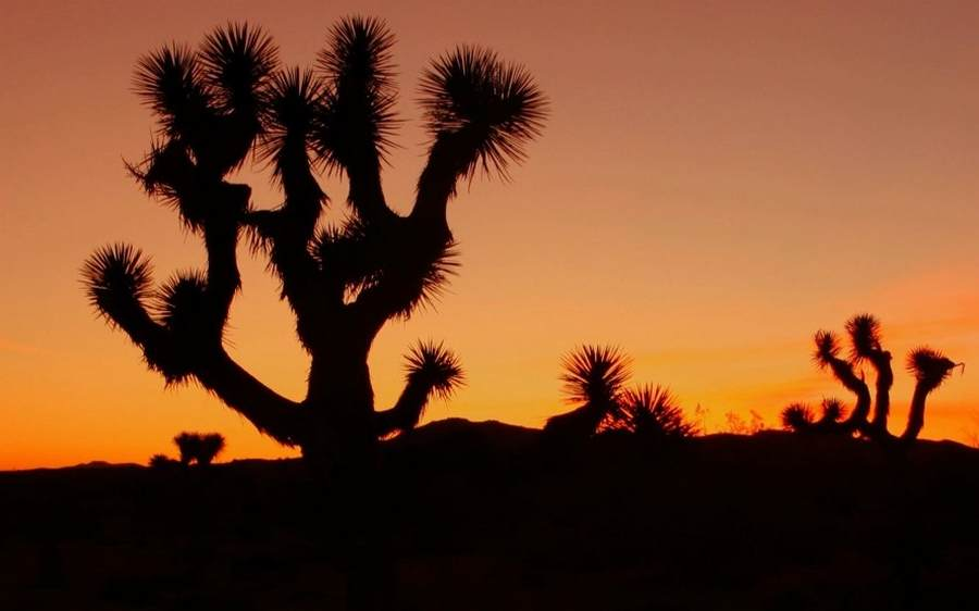 Joshua Tree Journey