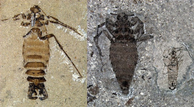Oldest Fleas discovered from the Early Cretaceous