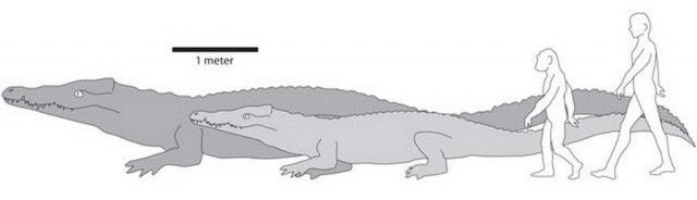 Largest known crocodile lived in East Africa