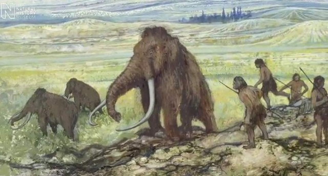 World s smallest mammoth lived on Crete