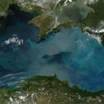 Bloom of phytoplankton in the Black Sea