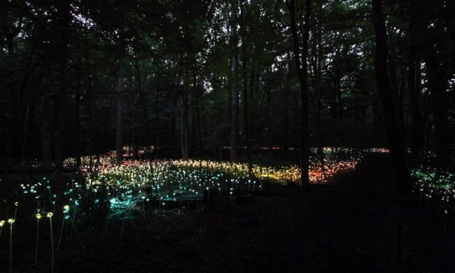 Fields of LED Flowers at Longwood Gardens by Bruce Munro
