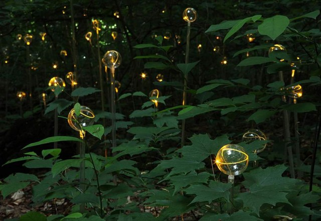 Fields of LED Flowers at Longwood Gardens by Bruce Munro (2)