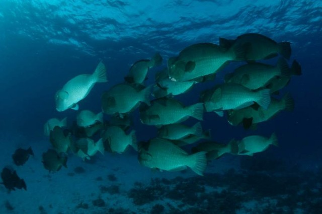 World's Largest Marine Reserve