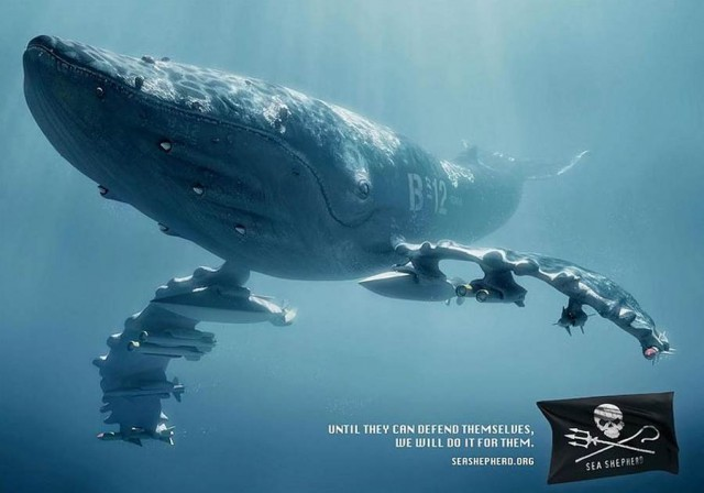 Sea Shepherd Organization- advertisement