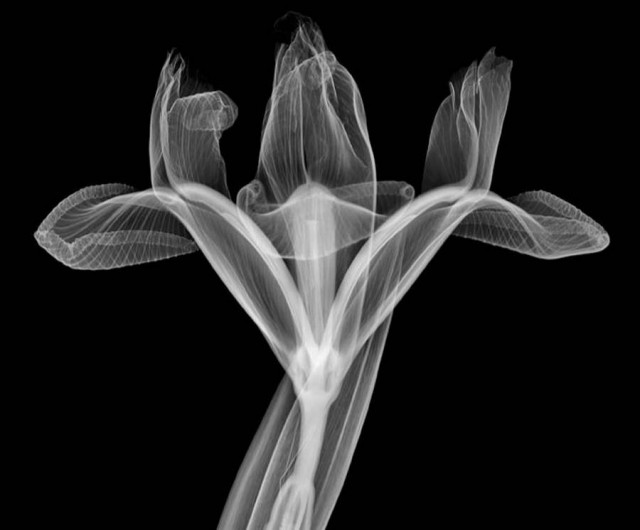 X-Ray photography by Nick Veasey (2)