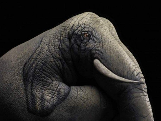 Hand paintings by Guido Daniele (7)