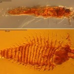 Oldest Bugs ever preserved in Amber found