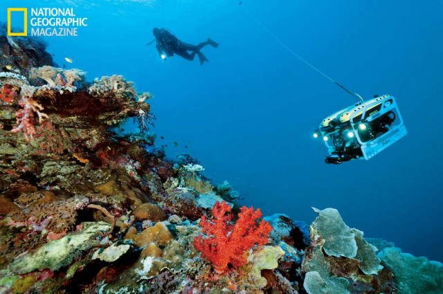 A diver explores a shallow, coral-encrusted seamount slope near Raja Ampat