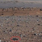 Two Alien Lifeforms on Mars?