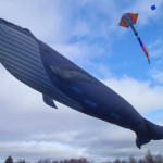 100 foot long blue whale Kite