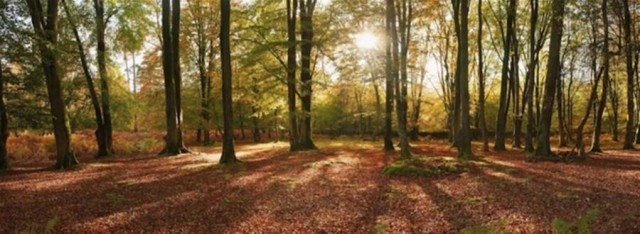 New Forest in Autumn by Jeremy Walker