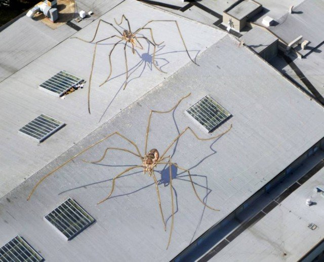 Huge Daddy Longlegs Mural on the Roof