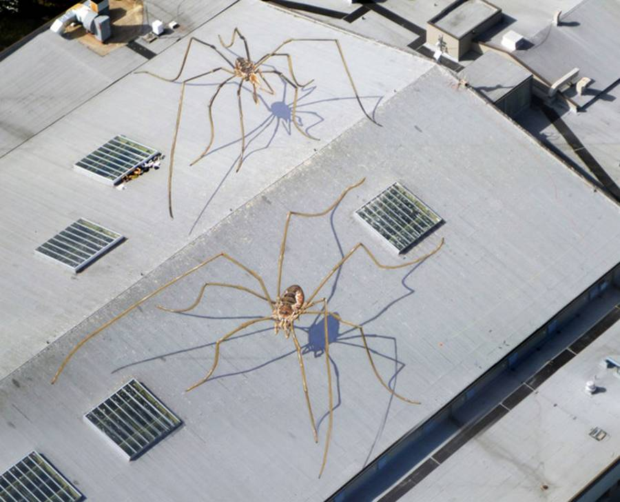 Huge Daddy Longlegs Mural on the Roof (3)