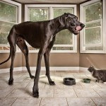 The world's tallest dog- Zeus