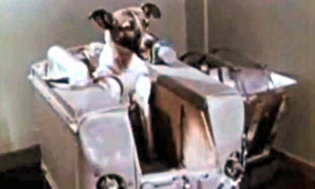 first animal in space laika - photo #22