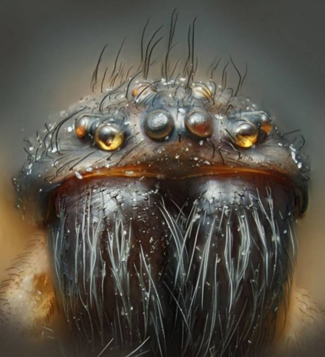 House Spider, photographer Harold Taylor