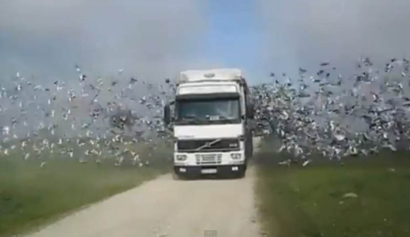 Birds flying out of truck into freedom