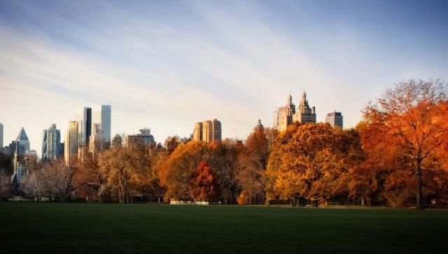 Fall in Central Park (5)
