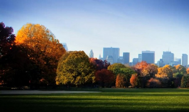 Fall in Central Park (4)