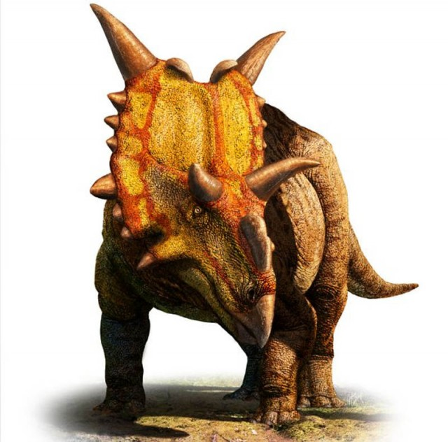 Xenoceratops Dinosaur discovered in Canada
