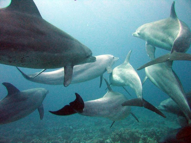 Adorable Wild Dolphins