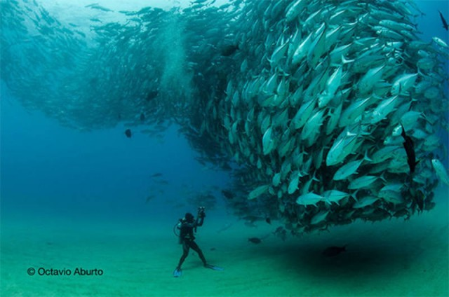 Fish Tornado by Octavio Aburto