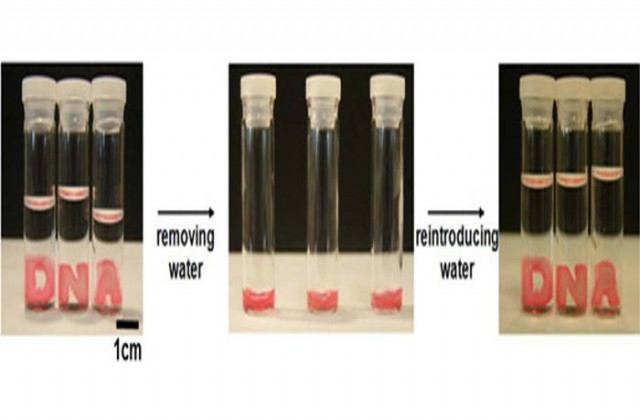 Hydrogel- Solid when wet and Liquid when dry