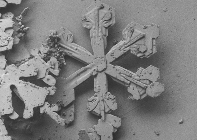 Snowflake Images under an Electron Microscope
