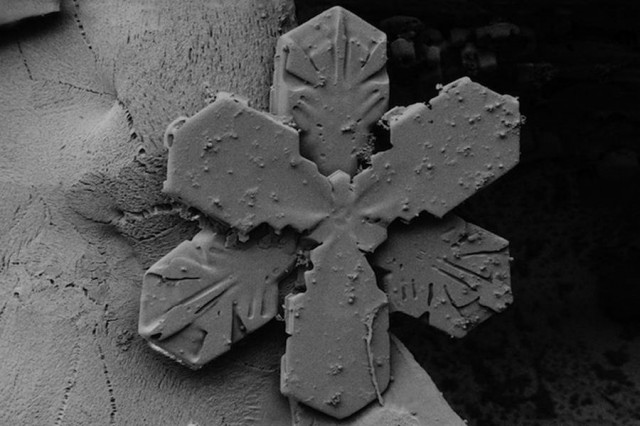 Snowflake Images under an Electron Microscope (4)