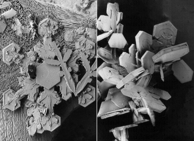 Snowflake Images under an Electron Microscope (1)