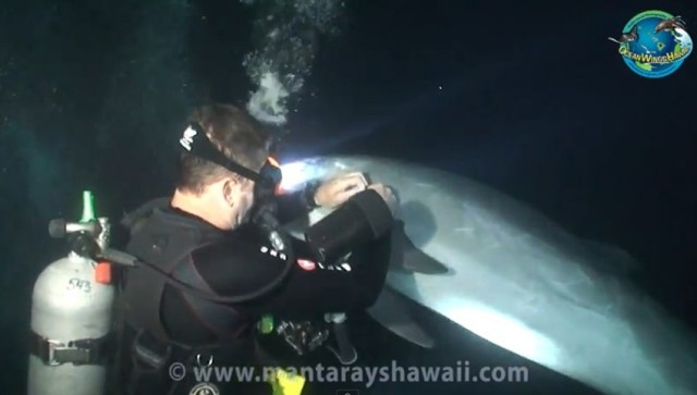 Dolphin Rescue on video