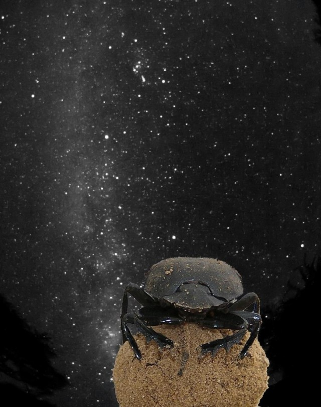 Scarab navigates by Milky Way