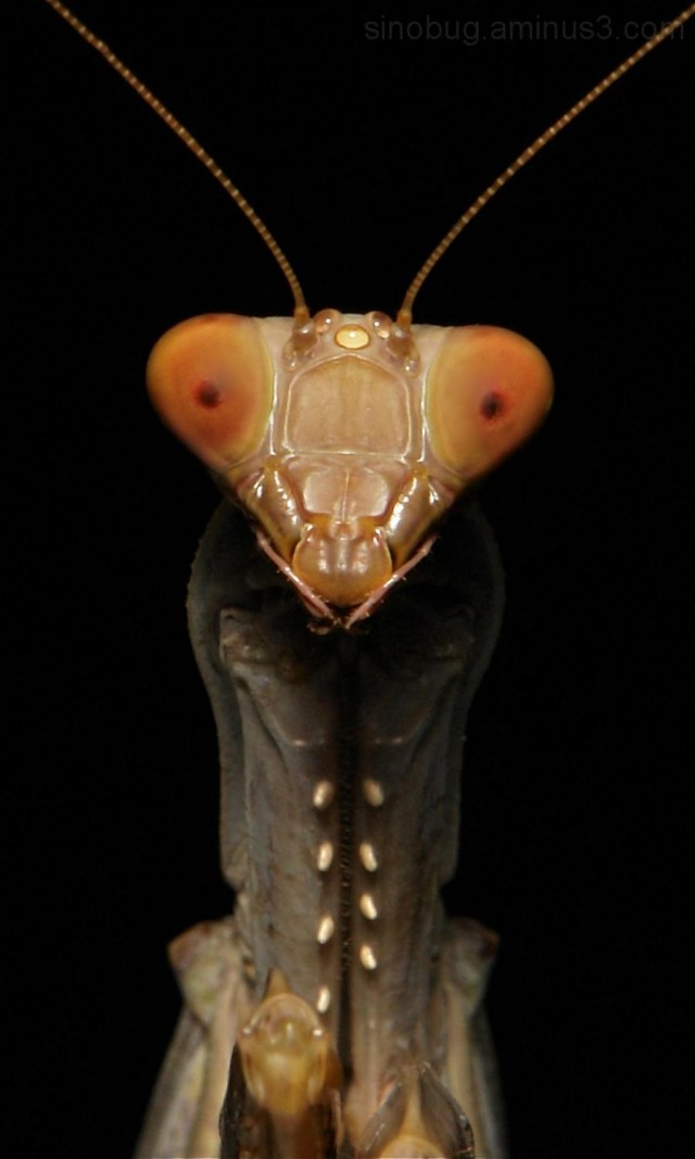 Sinobug- Macrophotography by John Horstman (2)