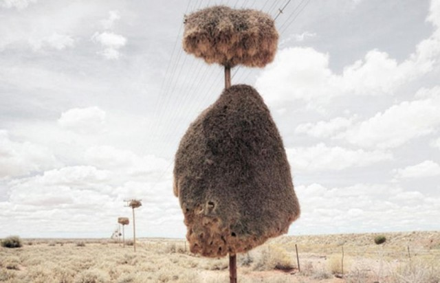 Mysterious Structures in the Southern Kalahari