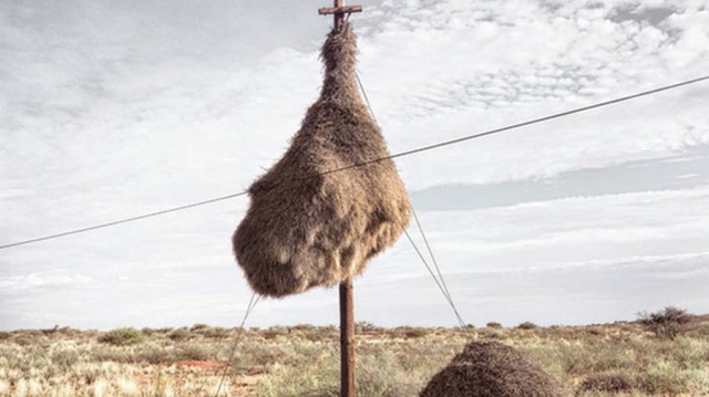 Mysterious Structures in the Southern Kalahari (3)