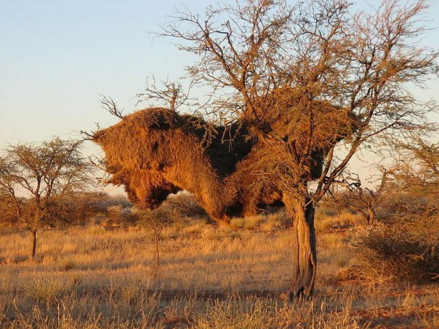 Mysterious Structures in the Southern Kalahari (1)