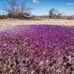 Mysterious purple spheres found in the desert