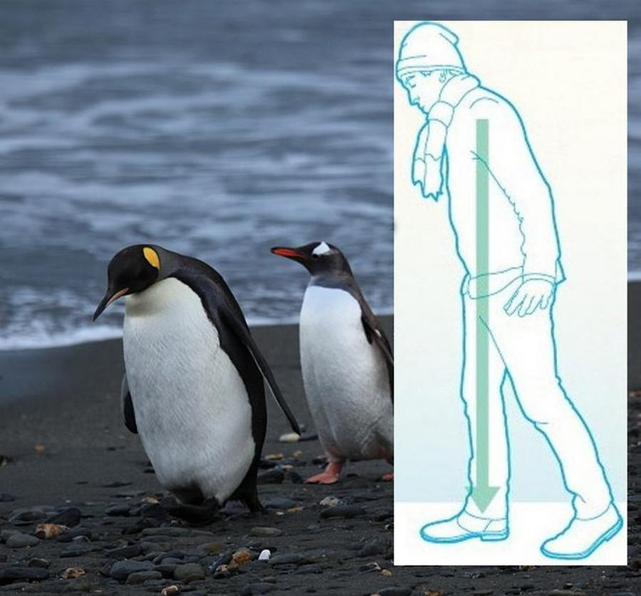 Penguins teach us how to walk on ice