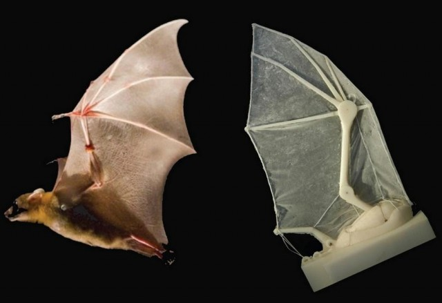 Robotic Bat Wing