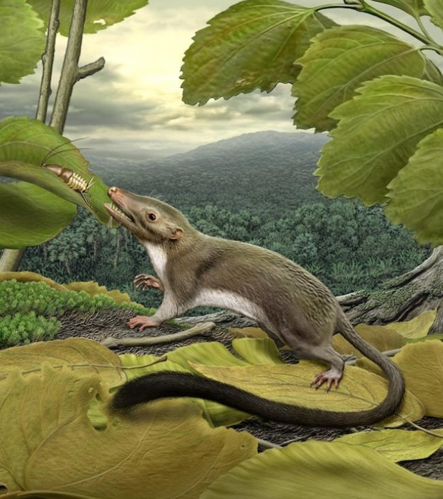 The Mammal ancestor after the Dinosaurs