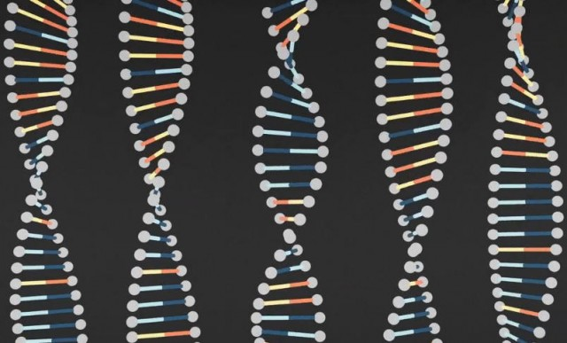 Explaining DNA