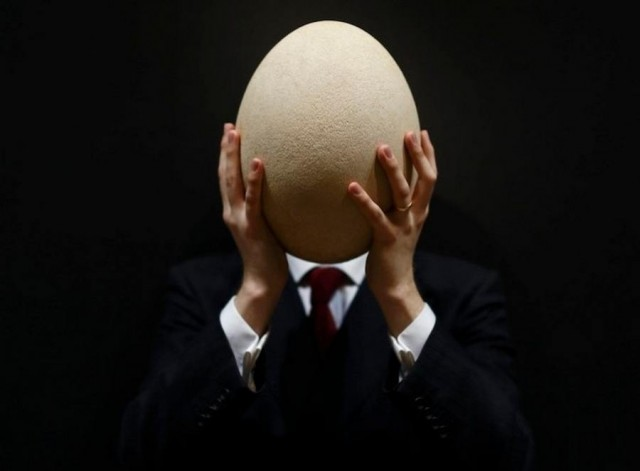 https://wordlesstech.com/wp-content/uploads/2013/03/Giant-Elephant-bird-egg-up-for-Auction-11-640x471.jpg