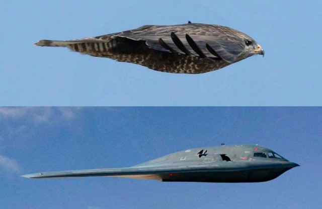 Stealth Bomber inspired by Hawk