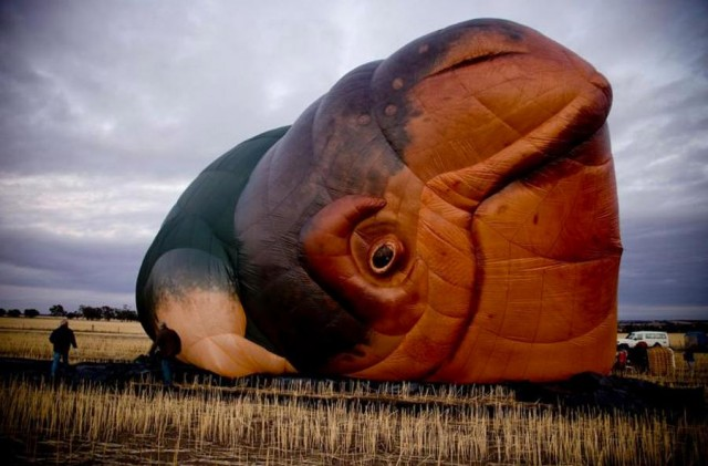 The Skywhale in First Flight (1)