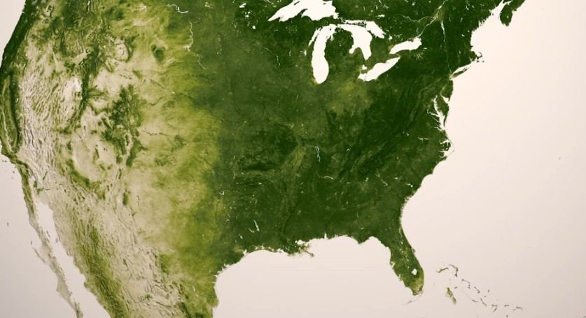 Earth's Green- Vegetation on Our Planet