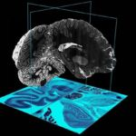New revolutionary 3D Brain Atlas