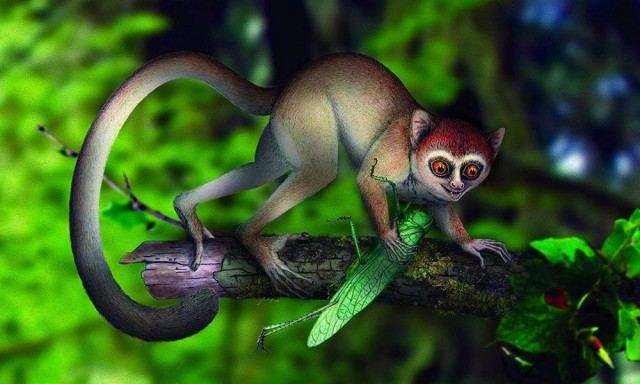 The oldest primate skeleton ever discovered