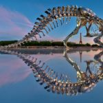 Full-scale T-Rex in Paris by Philippe Pasqua