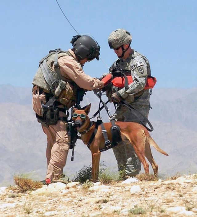 The Dogs of War- MWD, Military Working Dogs (12)